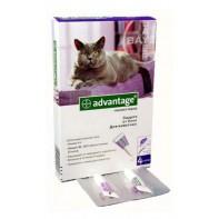 Bayer Адвантейдж 80 К для кошек больше 4 кг (4 пипетки х 0,8 мл)